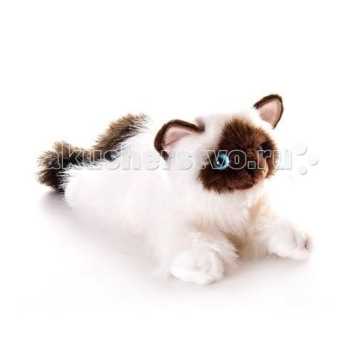 Мягкая игрушка Aurora Кошка сиамская 30 см 61-822