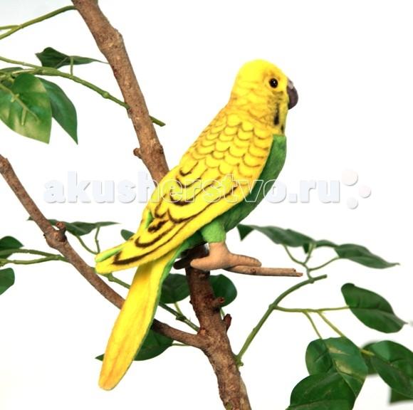 Мягкая игрушка Hansa Волнистый попугайчик зеленый 15 смВолнистый попугайчик зеленый 15 смВолнистый попугайчик зеленый, 15 см.  Игрушки Ханса изготовлены из искусственного меха очень приятного на ощупь, внутри имеют титановый каркас. Наличие каркаса позволяет изменять положение лап и туловища, а также поворачивать голову. Игрушки полностью копируют оригинал и могут быть выполнены в натуральную величину. На крупно габаритных игрушках ослик, лошадка и проч., размером от 1м можно сидеть верхом.   Благодаря прочному каркасу, они выдерживают вес до 65-70кг. Компания Hansa была основана в 1972 году на Филиппинах мистером Хансом Акстельмом и в прошлом году отметила свой 40 летний юбилей. 7 мировыч обществ охраны природы признали мягкие игрушки фирмы Ханса самыми натуралистичными моделями животных .  Мягкие игрушки Ханса: абсолютно реалистичные жирафы, слоны, коалы и медведи, изготовленные из экологически чистых материалов, сертифицированные как детские игрушки, могут так же стать великолепным украшением любого интерьера – от оформления комнаты до торгового зала, офиса, ресторана, шоу-программы или праздничной вечеринки.  Игрушки HANSA идеальны для модных интерьеров в африканском или японском стиле. Благодаря своей реалистичности игрушки Hansa имеют огромное природоохранное значение - они позволяют любоваться дикими животными, сохраняя им жизнь.  Отдельная линия анимированных декоративных композиций дает возможность создавать эффектные экспозиции для выставок, презентаций, витрин и проч. Мягкие анимированные игрушки нередко делаются на заказ, для конкретных интерьеров и событий. В ассортименте hansa игрушки более 3000 наименований: от райских птичек и мышей 5 см до слонов и жирафов 4,5 м.<br>