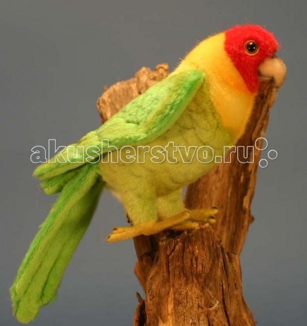 Мягкая игрушка Hansa Каролинский попугай 17 смКаролинский попугай 17 смКаролинский попугай 17 см.  Игрушки Ханса изготовлены из искусственного меха очень приятного на ощупь, внутри имеют титановый каркас. Наличие каркаса позволяет изменять положение лап и туловища, а также поворачивать голову. Игрушки полностью копируют оригинал и могут быть выполнены в натуральную величину. На крупно габаритных игрушках ослик, лошадка и проч., размером от 1м можно сидеть верхом.  Благодаря прочному каркасу, они выдерживают вес до 65-70кг. Компания Hansa была основана в 1972 году на Филиппинах мистером Хансом Акстельмом и в прошлом году отметила свой 40 летний юбилей. 7 мировыч обществ охраны природы признали мягкие игрушки фирмы Ханса самыми натуралистичными моделями животных .  Мягкие игрушки Ханса: абсолютно реалистичные жирафы, слоны, коалы и медведи, изготовленные из экологически чистых материалов, сертифицированные как детские игрушки, могут так же стать великолепным украшением любого интерьера – от оформления комнаты до торгового зала, офиса, ресторана, шоу-программы или праздничной вечеринки.  Игрушки HANSA идеальны для модных интерьеров в африканском или японском стиле. Благодаря своей реалистичности игрушки Hansa имеют огромное природоохранное значение - они позволяют любоваться дикими животными, сохраняя им жизнь. Отдельная линия анимированных декоративных композиций дает возможность создавать эффектные экспозиции для выставок, презентаций, витрин и проч. Мягкие анимированные игрушки нередко делаются на заказ, для конкретных интерьеров и событий. В ассортименте hansa игрушки более 3000 наименований: от райских птичек и мышей 5 см до слонов и жирафов 4,5 м.  Теперь в вашем доме поселится удивительный Каролинский попугай от компании Hansa. Ваш ребёнок сможет узнать, как выглядят эти птицы, чем питаются и как перемещаются по деревьям. Компания Hansa– известный во всем мире производитель интерьерных игрушек, удивительно схожих с представителями мира животных. Став частью инте