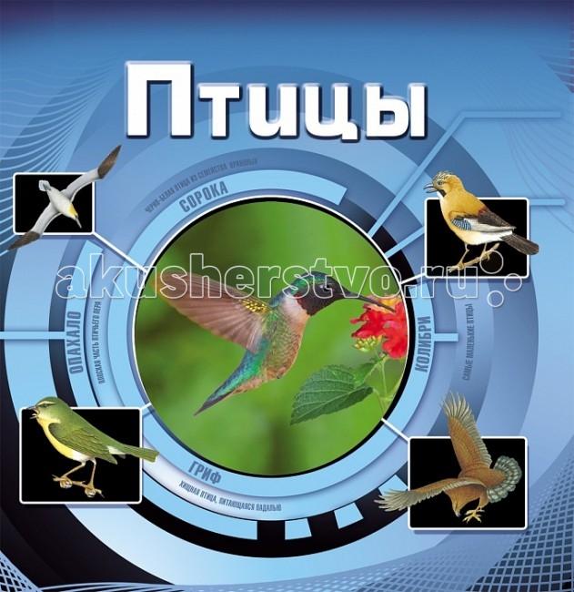 http://www.akusherstvo.ru/images/magaz/im53853.jpg
