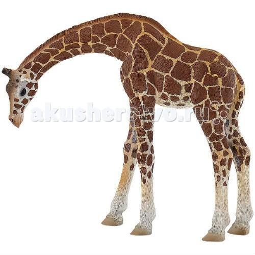 Bullyland Фигурка Жираф 14,5 смФигурка Жираф 14,5 смBullyland Фигурка Жираф 14,5 см. - любимец детей и взрослых, ни на кого не похожий добрый зверь, кто это? Конечно, это жираф!   Обладатель самой длинной шеи, огромных выразительных глаз и милых ушей питается растительной едой. Фигурка жирафа выполнена как коллекционная модель и полностью повторяет все особенности внешнего вида и анатомического строения животного.   Фигурка расписана вручную.   Игрушка изготовлена из высококачественных, нетоксичных материалов и абсолютно безопасна для детей.   Размер: 162 х 50 х 142 мм.<br>