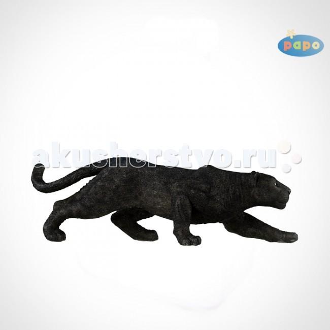 Papo Игровая реалистичная фигурка Черная пантераИгровая реалистичная фигурка Черная пантераИгровая реалистичная фигурка Черная пантера 50026  Ручная роспись. Все фигурки Papo проходят тщательную подготовку и обработку, поэтому они крепкие и долговечные. Материал: высококачественный полимерный материал.  Черная пантера обладает очень темным окрасом шерсти, который отличается от светлых сородичей покрытых черными пятнами. Но действительно идет речь о том же виде. Эта разница цвета связана с генетическим изменением. В засаде, эта пантера ждёт подходящего момента, чтобы наброситься на свою добычу!   Пантера, которая также называется леопард - это величественное животное вида кошек. Живут они в различных местах обитания в зависимости от вида. Пантера хороший охотник, питается мясом и весит около 60 килограмм. Прыжки пантеры впечатляют – она способна прыгать очень быстро и далеко. Она также прекрасно лазает по деревьям. Остатки крупной добычи пантера затаскивает на дерево, чтобы уберечь свою пищу от других хищников, таких как гиены и шакалы.<br>