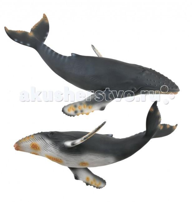 Gulliver Collecta Фигурка Горбатый кит XLCollecta Фигурка Горбатый кит XLМалыш сможет придумывать для фигурки свои сюжетные истории и увлекательные игры. Красочные декоративные фигурки, выполненные с точно проработанными деталями можно коллекционировать.  Новое игровое приобретение надолго увлечет детское внимание, развивая зрительное и тактильное восприятие, мелкую моторику, проявление фантазий и воображения, а также настроит детскую аудиторию на положительный эмоциональный фон и поднимет настроение.  Выполнена фигурка с детальной прорисовкой и соблюдением всех пропорций из качественного и нетоксичного материала, приятного на ощупь и довольно износоустойчивого.  Особенности фигурки: Материал: нетоксичный пластик. Возраст ребёнка: от 3 лет. Размер: 21.2 х 12 см Размеры упаковки: 21 х 12,5 х 5,5 см. Упаковка: блистер.<br>