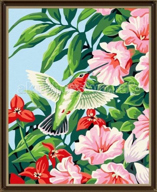 Раскраска Molly Картина по номерам Колибри в цветах 40х50 см