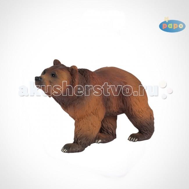 Papo Игровая реалистичная фигурка Бурый медведьИгровая реалистичная фигурка Бурый медведьИгровая реалистичная фигурка Бурый медведь 50032  Ручная роспись. Все фигурки Papo проходят тщательную подготовку и обработку, поэтому они крепкие и долговечные.  Материал: высококачественный полимерный материал.  Один из самых крупных хищных наземных млекопитающих. У бурого медведя мощное тело с высокой холкой, массивная голова с небольшими ушами и мощные короткие лапы с когтями. Окраска бурого медведя меняется от светло-палевого до почти черного, в зависимости от места обитания.   Рост медведя, стоящего на задних лапах составляет 2,5-3 метра, а вес от 300 до 500 кг. Это лесной житель. Питается в основном растительной пищей, но может охотиться и на крупных копытных, таких как косули, лани и олени. Но больше всего медведи любят лакомиться мёдом, отсюда и название – ведают где мед.   Они прекрасно умеют лазить по деревьям, чтобы добраться до ульев и разорить его, насладившись личинками, медом и воском. Летом медведи усиленно питаются, чтобы нагулять жир для зимней спячки, которая длится 5-6 месяцев.<br>