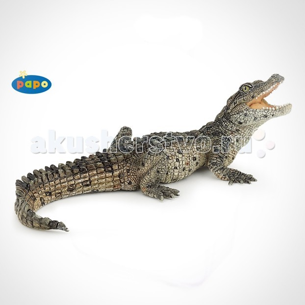 Papo Игровая реалистичная фигурка Крокодильчик - PapoИгровая реалистичная фигурка КрокодильчикИгровая реалистичная фигурка Крокодильчик 50137  Ручная роспись. Все фигурки Papo проходят тщательную подготовку и обработку, поэтому они крепкие и долговечные.  Материал: высококачественный полимерный материал.<br>