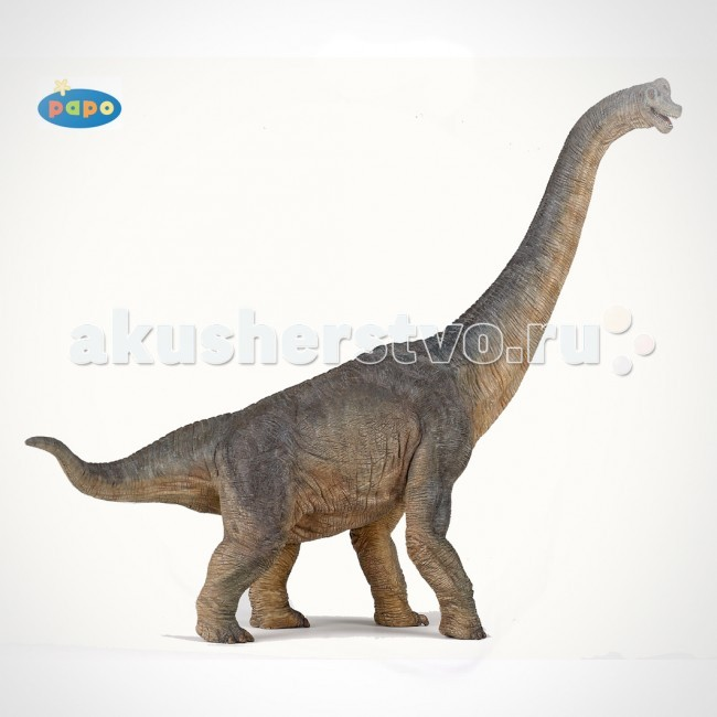 Papo Игровая реалистичная фигурка БрахиозаврИгровая реалистичная фигурка БрахиозаврИгровая реалистичная фигурка Брахиозавр 55030   Ручная роспись. Все фигурки Papo проходят тщательную подготовку и обработку, поэтому они крепкие и долговечные.  Материал: высококачественный полимерный материал.<br>
