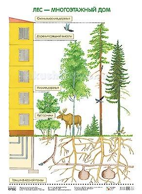 Мозаика-Синтез Обучающий плакат Лес — многоэтажный домОбучающий плакат Лес — многоэтажный домМозаика-Синтез ПЛ Лес — многоэтажный дом. Плакат большого формата Лес — многоэтажный дом издан в рамках учебно-методического комплекта к парциальной программе С. Н. Николаевой Юный эколог.   Плакат расскажет детям о том, какие животные живут на разных этажах леса, чем питаются, где и как устраивают свое жилище.  Великолепные красочные иллюстрации обязательно заинтересуют ребят и помогут легко усвоить новые знания.<br>