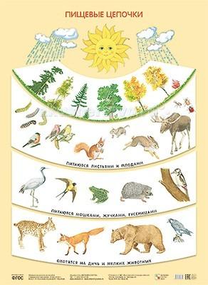 Мозаика-Синтез Обучающий плакат Пищевые цепочки