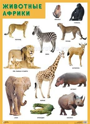 Мозаика-Синтез Обучающий плакат Животные Африки