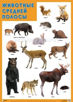 Мозаика-Синтез Обучающий плакат Животные средней полосы