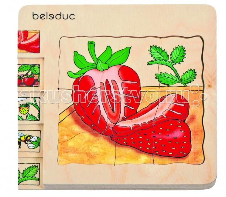 ���������� ������� Beleduc ����������� ���� �������� 17040