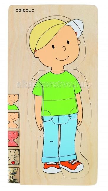 Деревянная игрушка Beleduc Развивающий Пазл Мальчик 17129Развивающий Пазл Мальчик 17129Развивающий Пазл Мальчик Beleduc 17129  Эта развивающая игрушка  представляет собой пазл из 5-ти слоев и позволяет ребенку легко изучить строение своего тела. Каждый слой, состоящий из 7 частей, описывает отдельную систему тела человека - скелет, внутренние органы, мышцы. В процессе игры дети весело и легко познают свое тело.  Игрушка развивает познавательные, ассоциативные навыки, способности комбинировать, способности логического и образного мышления, развивает мелкую моторику рук.  Все детали выполнены из высококачественных материалов, совершенно безопасных для маленьких детей.  Пазлы Beleduc, изготовленные из русской березы, всегда особенные, они объединяют не только гениальные идеи с эксклюзивными иллюстрациями, но и креативность и качество. Все пазлы рассчитаны на разные возрастные категории, уровни сложности. Но все они очень красочные, увлекательные и главное познавательные.<br>