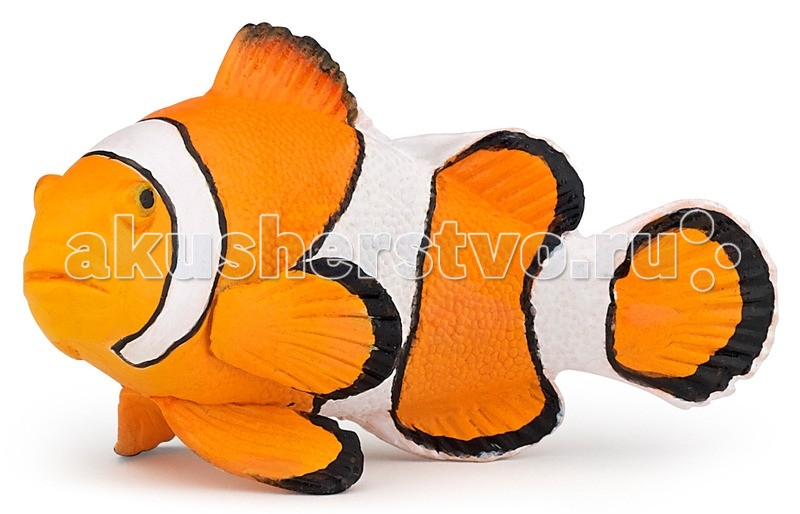 Papo Игровая реалистичная фигурка Рыба клоунИгровая реалистичная фигурка Рыба клоунPapo Игровая реалистичная фигурка Рыба клоун  Особенности: Ручная роспись.  Все фигурки Papo проходят тщательную подготовку и обработку, поэтому они крепкие и долговечные. Материал: высококачественный полимерный материал.  Размеры: 2х3,5х6 см<br>