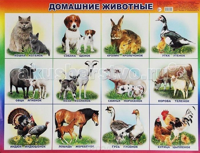 Алфея Плакат Домашние животные