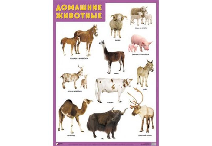 Мозаика-Синтез Обучающий плакат Домашние животные