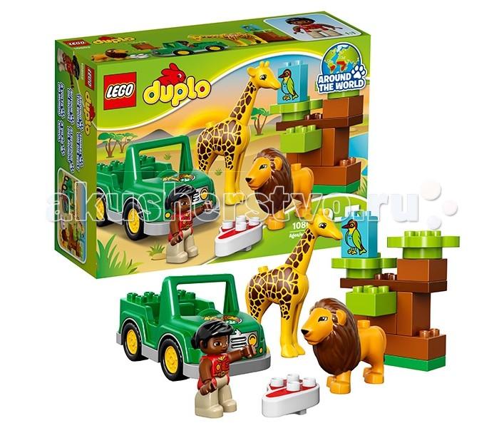 Конструктор Lego Duplo 10802 Лего Дупло Вокруг света АфрикаDuplo 10802 Лего Дупло Вокруг света АфрикаКонструктор Lego Duplo 10802 Лего Дупло Вокруг света: Африка  Чтобы отправиться вглубь африканской саванны и встретить как можно больше её обитателей, необходимо воспользоваться услугами опытного гида. Он не только расскажет множество интересных фактов их жизни животных, но и покажет места их ночлега или водопоя.   Для организации такого путешествия гид всегда использует свой надёжный внедорожник с усиленной подвеской, ярко-зелёным корпусом и противотуманными фарами. Благодаря отсутствию крыши, из салона автомобиля открывается прекрасный вид на удивительный ландшафт, состоящий из зелёной травы, экзотических кустарников и высоких деревьев. Под тенистыми кронами можно встретить львов, отдыхающих после сытного обеда, а неподалёку от них – жирафа, наслаждающегося свежими листьями.  В наборе Лего 10802 Вы найдёте голубой кубик с изображением птицы-носорога и 3 фигурки: смотритель заповедника, лев с косматой гривой и жираф с подвижной шеей, а также детали для создания африканской саванны.  Размер внедорожника в собранном виде составляет 8х7х14 см.  Количество деталей: 18 шт.<br>