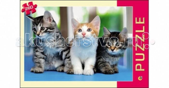 Рыжий кот Пазлы Три котёнка (260 элементов)