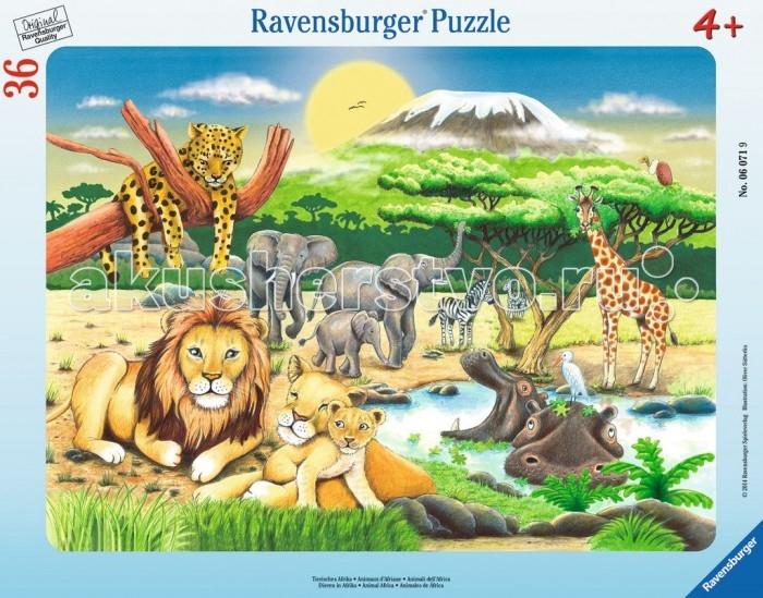 Ravensburger ���� �������� ��� ������ 36 ���������