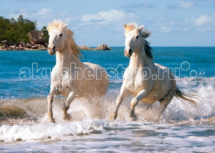 Castorland Пазл Белая лошадь 1000 элементовПазл Белая лошадь 1000 элементовПазл Белая лошадь станет отличным подарком не только взрослым поклонникам лошадей, но и детям, обожающим этих прекрасных и грациозных животных.  Пазл Белая лошадь состоит из 1000 элементов. Потребуется усидчивость, терпение и время, чтобы собрать пазл. Поэтому пазл больше подойдет детям школьного возраста и взрослым.  Размер собранного поля: 68 х 47 см<br>