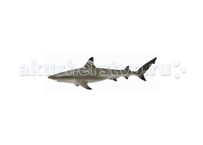Gulliver Фигурка Рифовая акулаФигурка Рифовая акулаGulliver Collecta Фигурка Рифовая акула является уменьшенной копией настоящей акулы. Кажется, что игрушка вот - вот оживет.  Особенности: Все детали тщательно проработаны, что способствует развитию воображения и тактильных ощущений у ребёнка во время игры. Декоративная фигурка станет изысканным и уникальным сувениром, и понравится как детям, так и их родителям. Фигурка изготовлена из высококачественной пластмассы и раскрашены вручную.  Размеры: 11.4 х 3.3 см<br>