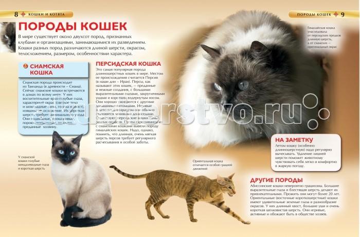 Как сделать книгу про котят
